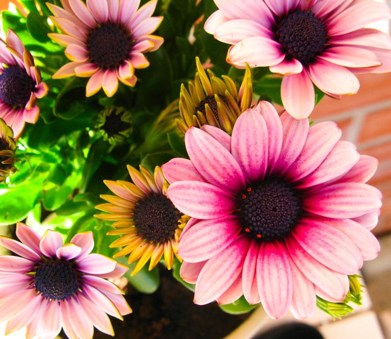 Zuri_Zuberi_flowers_misc_2
