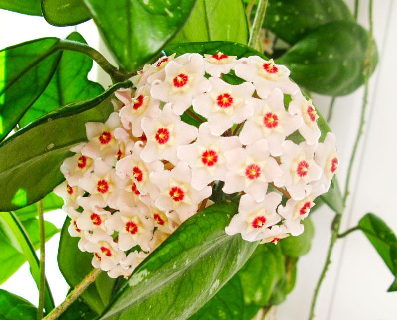 Zuri_Zuberi_flowers_misc_3