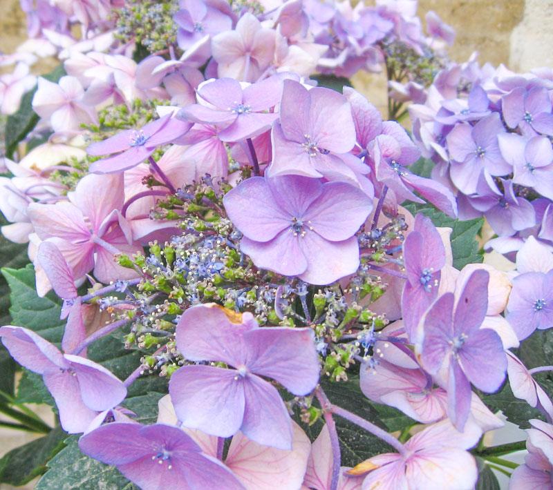 Zuri_Zuberi_flowers_misc_4