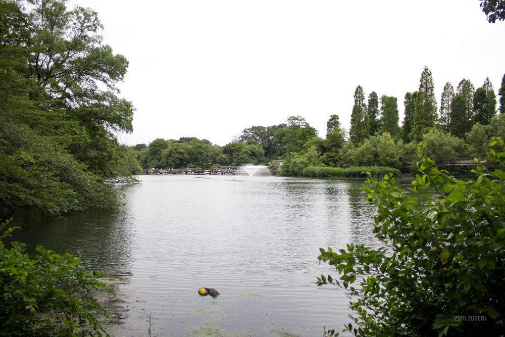 zuri_zuberi_inokashira_park_1