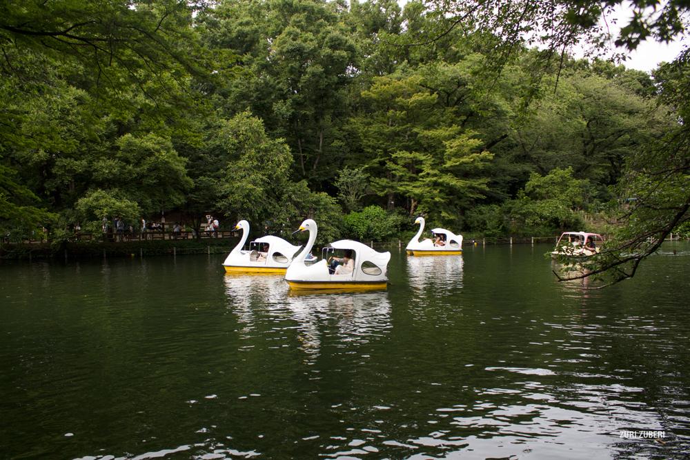 zuri_zuberi_inokashira_park_10