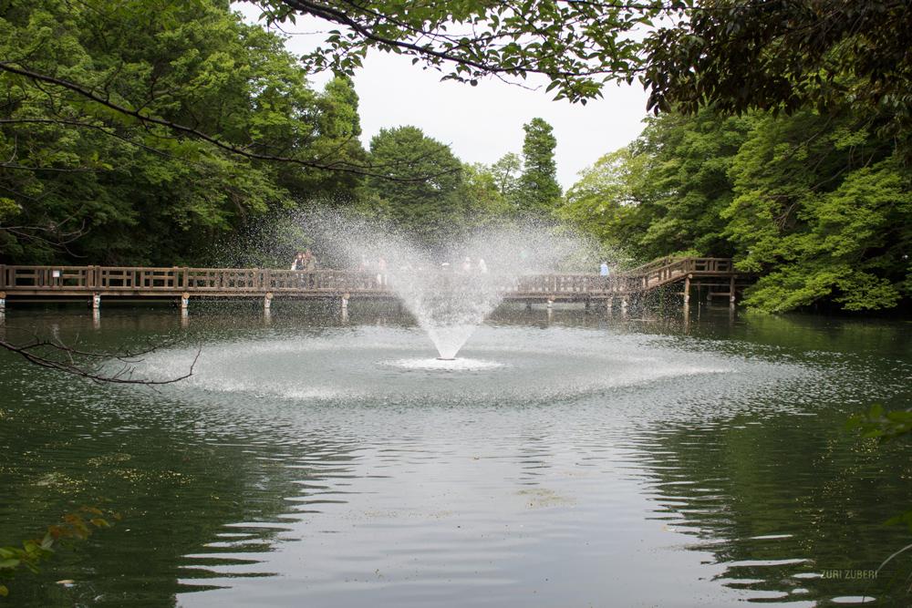 zuri_zuberi_inokashira_park_2