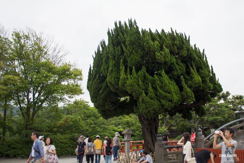Zuri_Zuberi_Kamakura_1