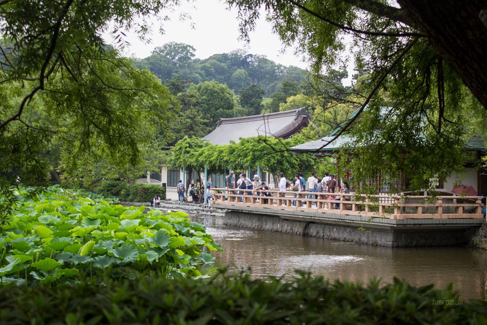 Zuri_Zuberi_Kamakura_4