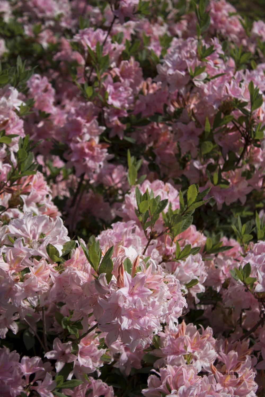 Ceremonial Blooms